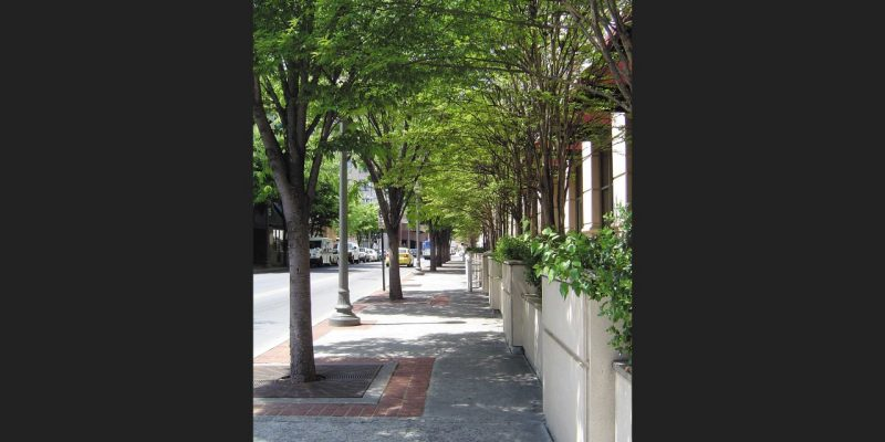 Tree lined urban street