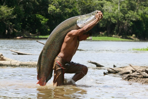 A fisherman walking in a river carrying a very large fish on his back