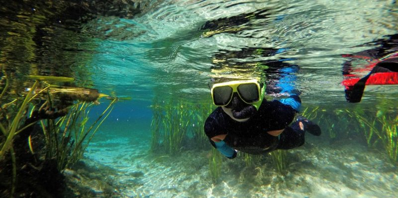 : In this underwater view, a school student wearing goggles, a snorkel, and a wetsuit swims just under the surface, with grasses in the background.
